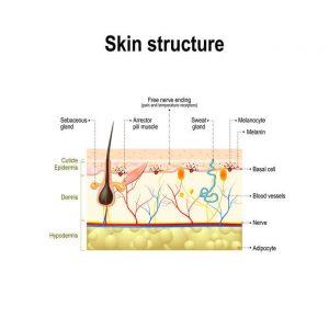 皮膚附屬器官